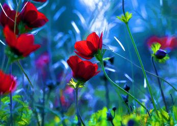 מחול הפרחים