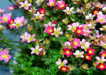 Great flowering