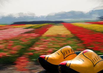הצבעים של הולנד