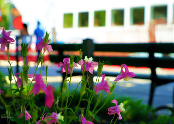 Flowers on the quay