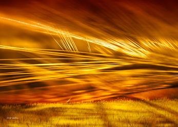 שדה של זהב
