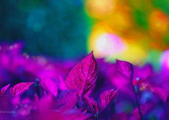 משחק של אור וצבע