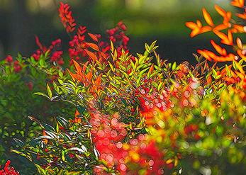 אור וצבע בטבע