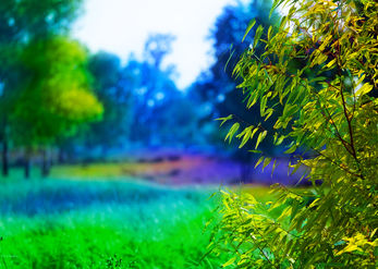טבע בצבע