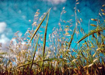 רוח בשדה