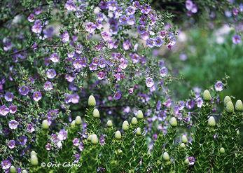 אביב בכל מקום