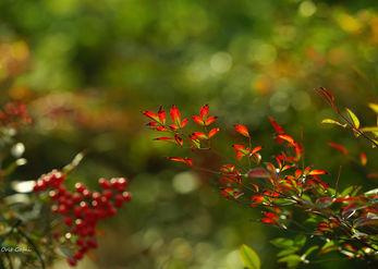 מאדום לאדום