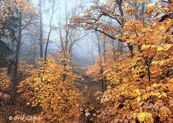 הזהב של הסתיו
