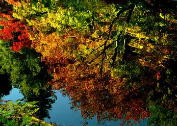 יער במים