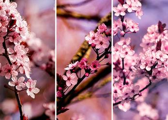 1, 2, 3, אביב