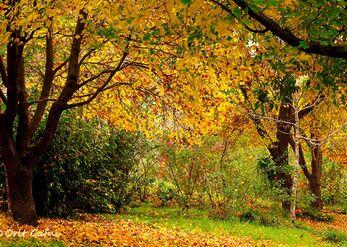 מנפלאות הסתיו