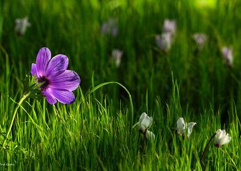 Flowers in Conversation